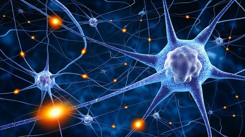 Nutraceutici, neurotossicità e disturbi neurodegenerativi