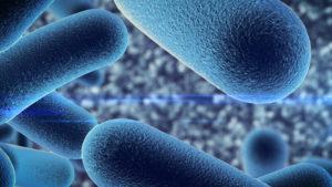 Probiotici nuova linea guida Ministero della salute-marzo2018